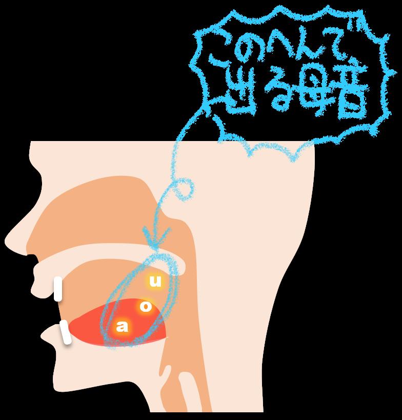 後舌母音の調音部位